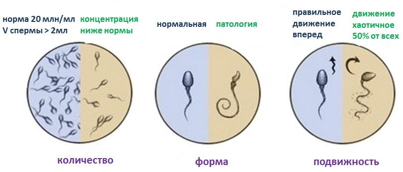 video-kak-trahayutsya-devushki-smotret